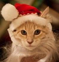 It's the most…wonderful time…meow meow meow…